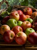 Rare apples produce heritage juices